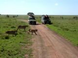 Serengeti female + cubs