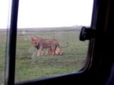 Serengeti mates