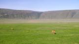 Ngorongoro lions - first sighting