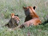 Serengeti mom + cub
