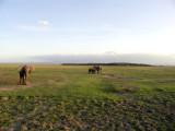 Amboseli Giants -- Elephants in foreground, Kilimanjaro in the background