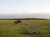 Amboseli Giants II -- Elephants in foreground, Kilimanjaro in the background