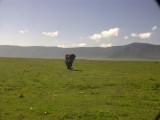 Ngorongoro boy