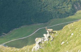 Steenbok nabij Piz Corandoni
