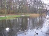 Haagsche Bos
