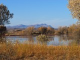 Bosque del Apache, afternoon view