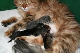 Gemma's first litter - Nikopeja's M-litter
