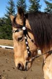 Horseback ride on a winter day