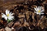Chestnut Ridge Heritage Preserve 2