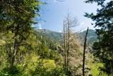 Alum Cave Trail 9