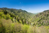 Newfound Gap Road View 1