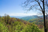 Newfound Gap Road View 3