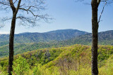 Newfound Gap Road View 4