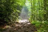 Ramsay Cascades Trail 2