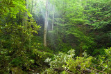 Ramsay Cascades Trail 3