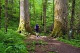 Ramsay Cascades Trail 4
