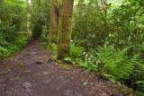 Ramsay Cascades Trail 5