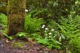 Ramsay Cascades Trail 6