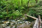 Ramsay Cascades Trail 8