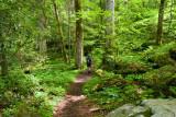 Ramsay Cascades Trail 10
