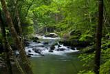 Little River - Elkmont area GSMNP
