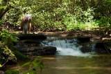 Dog Gobble Falls