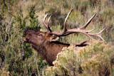 0020-Elk.jpg