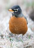 005-Robin.jpg