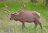 010-Elk.jpg