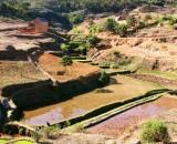 The rice fields between Andasibe and Antananarivo