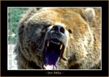 Bears_0173-copy-b.jpg