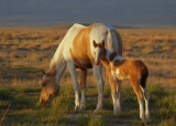 The Youngest wild horse