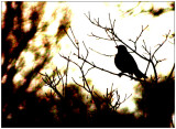 march 17 High Contrast Bird