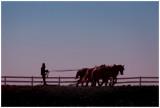 Amish Trip