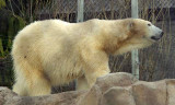Zoo 09 001.jpg