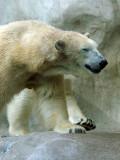 Zoo 09 005.jpg
