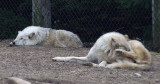 Zoo 09 014.jpg