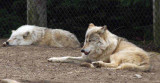 Zoo 09 015.jpg