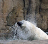 Zoo 09 023.jpg