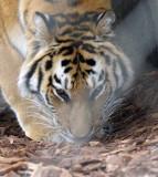 Zoo 09 068.jpg
