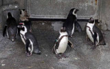 Zoo 09 074.jpg