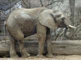 Zoo 09 079.jpg