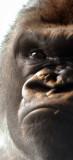 Zoo 09 158.jpg