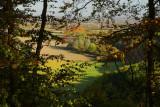 Autumn Trees 2.jpg