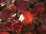 Luminous Leaves.jpg