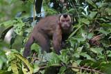 Mammals of Peru