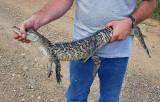 Gator Relocation
