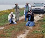 Birders Photographing Snow Bunting