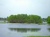 Heron Rookery on Otter Lake