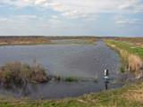 Pintail Lake